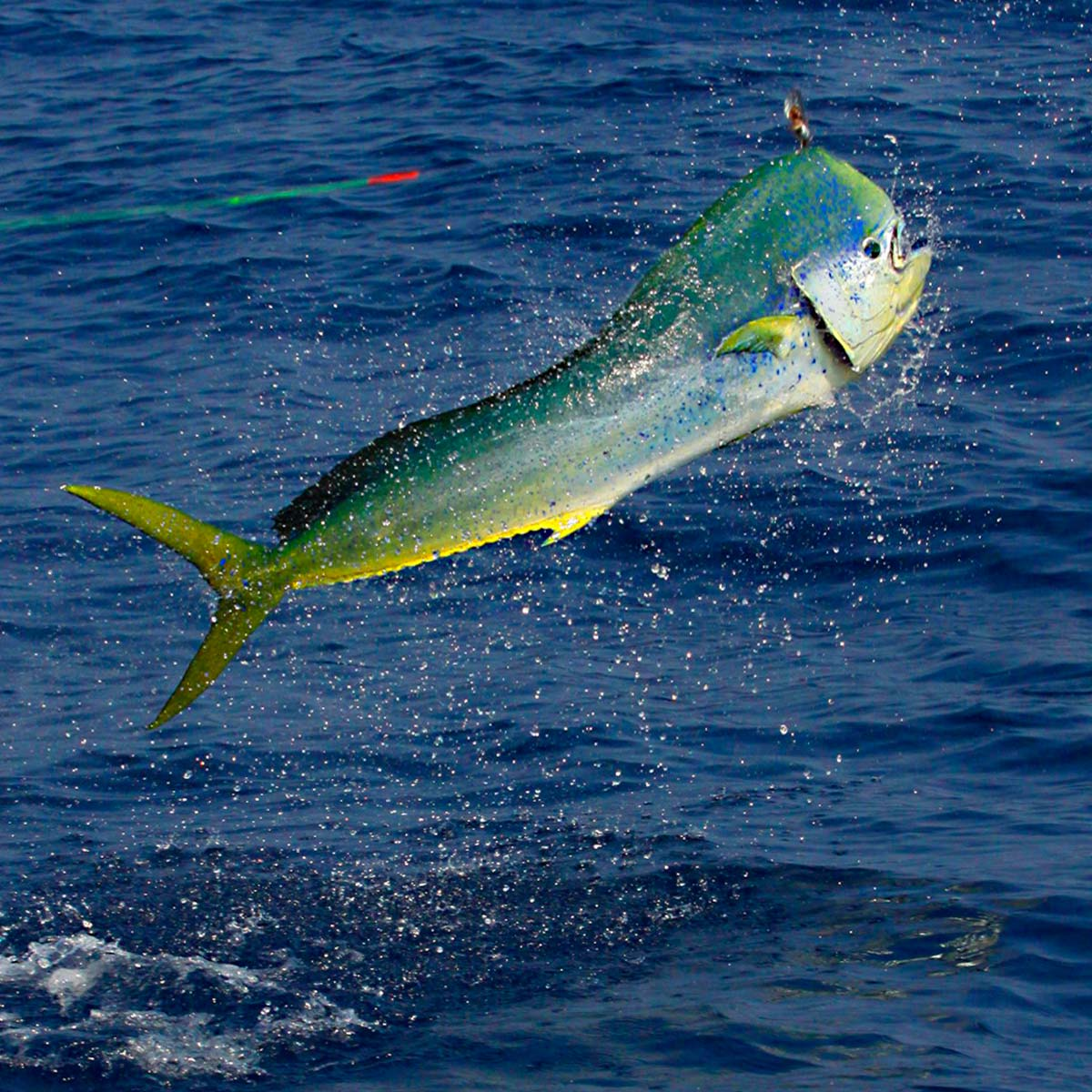 Affordable fishing in cabo san lucas seashine adventures for Fishing in cabo
