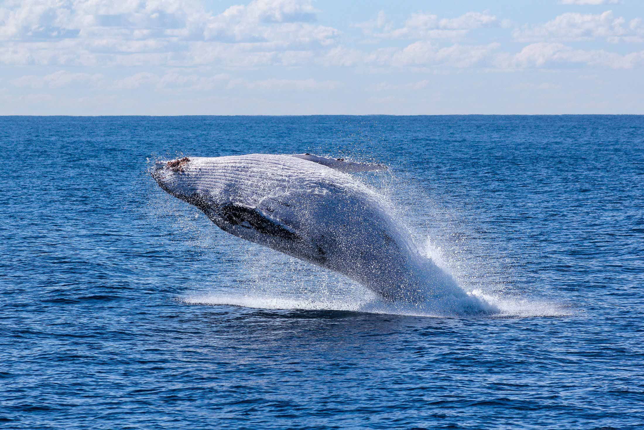 Wonderful Whales! Everything about Whale Watching in Cabo